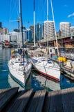 Två segelbåtar i hamnen av Sydney Royaltyfri Fotografi