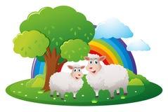 Två sheeps på lantgården vektor illustrationer