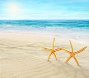 Två sjöstjärnor på stranden Fotografering för Bildbyråer