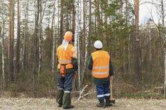 Två skärare av skogplanet fungerar, skogsarbetare ser royaltyfria bilder