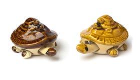 Två sköldpaddor på vit bakgrund Royaltyfri Bild
