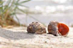 Två skal i sanden Royaltyfri Foto