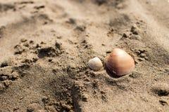 Två skal på sanden av en strand Royaltyfri Foto