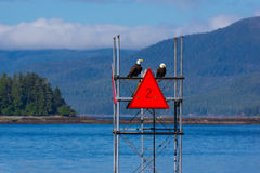 Två skalliga Eagles på navigeringtecken Fotografering för Bildbyråer