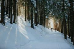 Två skidåkare som flyttar sig till och med skogen royaltyfri bild