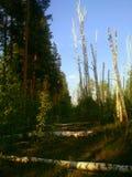 Två skogar royaltyfri bild