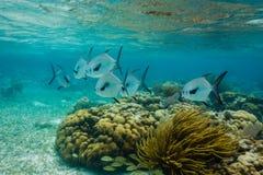 Två skolor av olikt stort vit- och svarttillstånd fiskar, Royaltyfria Bilder