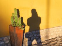 Två skuggor som konkurrerar på den gula husväggen royaltyfri foto