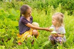 Två små flickor i trädgårds- squashar för en plockning Den äldre systern som ger den mer unga flickan en squash Arkivfoto