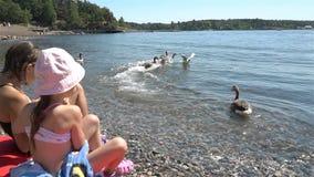Två små flickor matar lös grå gäss på stranden lager videofilmer