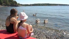Två små flickor matar lös grå gäss på stranden stock video