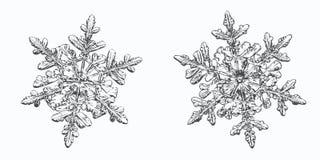 Två snöflingor som isoleras på vit bakgrund royaltyfri foto