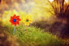 Två som är orange, och gula små solar mot naturbakgrund i solig sommardag Fotografering för Bildbyråer