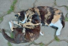 Två sova katter 2 Royaltyfria Bilder