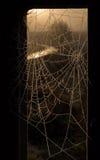 Två spindelnät i frosten Arkivfoton
