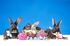 Två stora och tre lilla kaniner som sitter bredvid påskkorg Fotografering för Bildbyråer