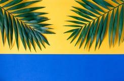 Två stora palmblad på en pappers- bakgrund royaltyfri bild