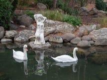 Två svanar i ett damm med antik skulptur Fotografering för Bildbyråer