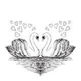Två svanar skissar Hand tecknad vektorillustration Royaltyfri Bild