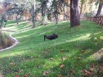 Två svarta swams på Parque Retiro- Madrid royaltyfri foto