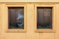 Två symmetriska fönster royaltyfri fotografi