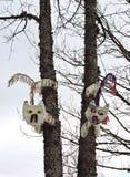 Två syr katter i träd Arkivfoton