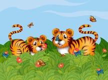 Två tigrar som spelar i trädgården Arkivbild