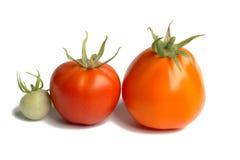 Två tomater Royaltyfria Foton