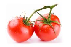 Två tomater på en grön stam Royaltyfria Bilder