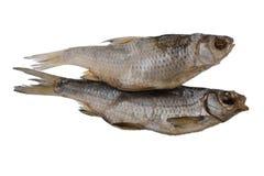 Två torkade den rimmade mörtfisken på en isolerad vit bakgrund Royaltyfria Bilder