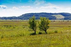 Två träd i ett fält i solsken Royaltyfria Foton