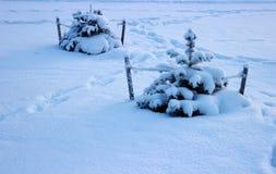Två träd i snö Fotografering för Bildbyråer