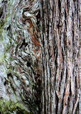 Två träd med olika åsikter royaltyfri bild