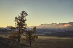 Två träd mot bakgrunden av berglandskapet av hösten Altai royaltyfri bild