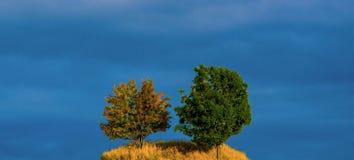 Två träd på fält Arkivbilder