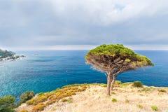 Två träd på kusten Arkivbilder
