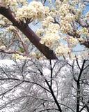 Två trädfilialer arkivbild