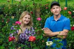 Två trädgårdsmästare är på bakgrunden av härliga rosor Arkivfoton