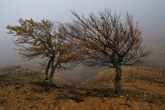 Två trees Arkivbild
