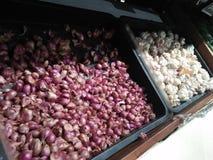 Två typer av röda och vita lökar kommer från organiskt lantbruk arkivfoton