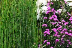 Två typer av växter Royaltyfria Bilder