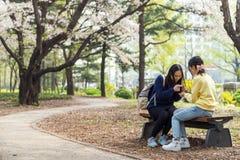 Två unga asiatiska damer sitter på bänk under den fulla körsbärsröda blomningen på utomhus- parkerar Royaltyfria Bilder