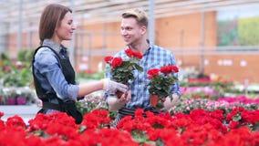 Två unga blomsterhandlare som arbetar på blommor, shoppar stock video