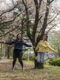 Två unga gladlynta asiatiska damer hoppar för glädje under den fulla körsbärsröda blomningen på utomhus- parkerar Royaltyfri Foto