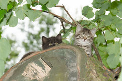 Två unga lösa katter Arkivfoto