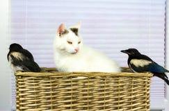 Två unga skator upptäckte kattkorgen Royaltyfri Foto