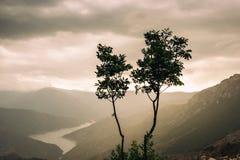 Två unga träd framme av en sjö på en molnig och regnig dag Arkivbild