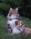 Två unga vänner Arkivbild