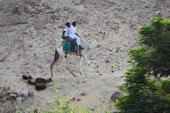 Två vänner och deras kamel royaltyfri bild
