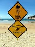 Två varningstecken på en strandvarning av den farliga marin- stingers och spyflugan göra gelé av fis Royaltyfri Fotografi